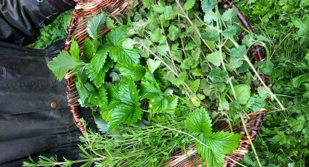 Wild foods and herb forage