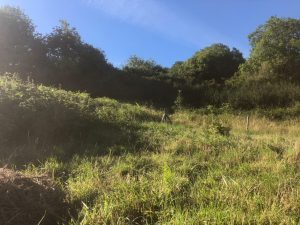 wild camping in a wild meadow and woodland in Dorset